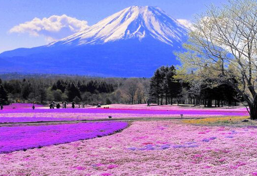【日本】日本本州阪东6天温泉美食滑雪之旅